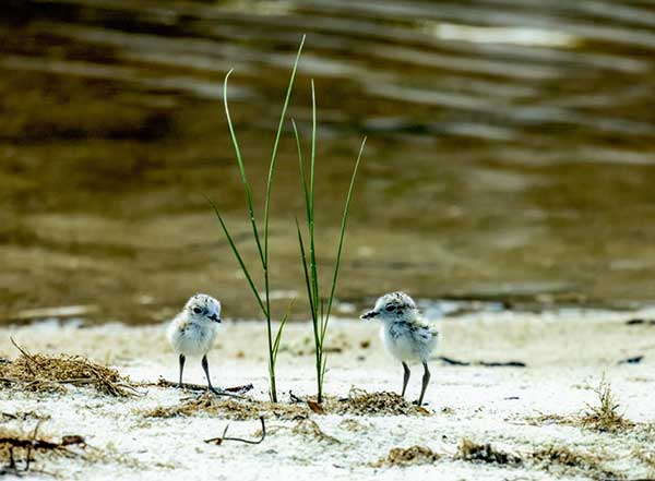 1ST PLACE FLORA & ANIMAL LIFE, BILL FAUTH, MEXICO BEACH, FL