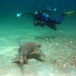 mexico-beach-diving-gallery-13