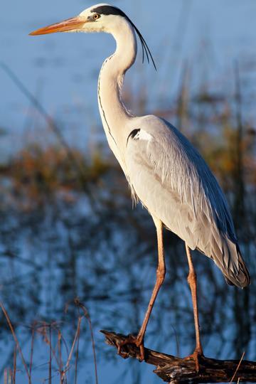 mexico-beach-ecotourism-birding