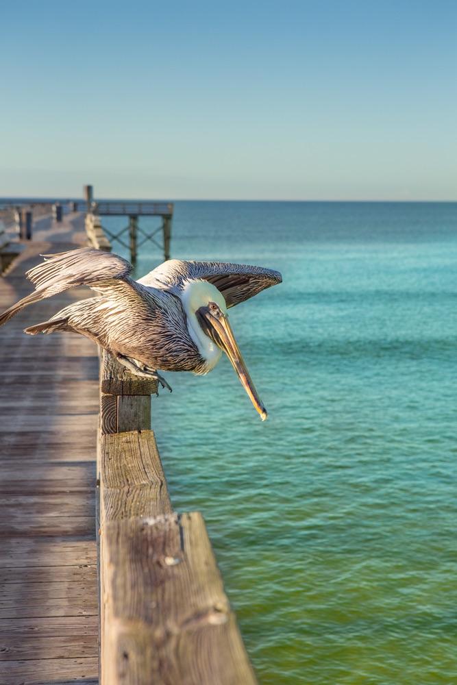 Photo_3mexico-beach-blog-winter-activities, mexico beach, ecotourism, animals, bird, pelican