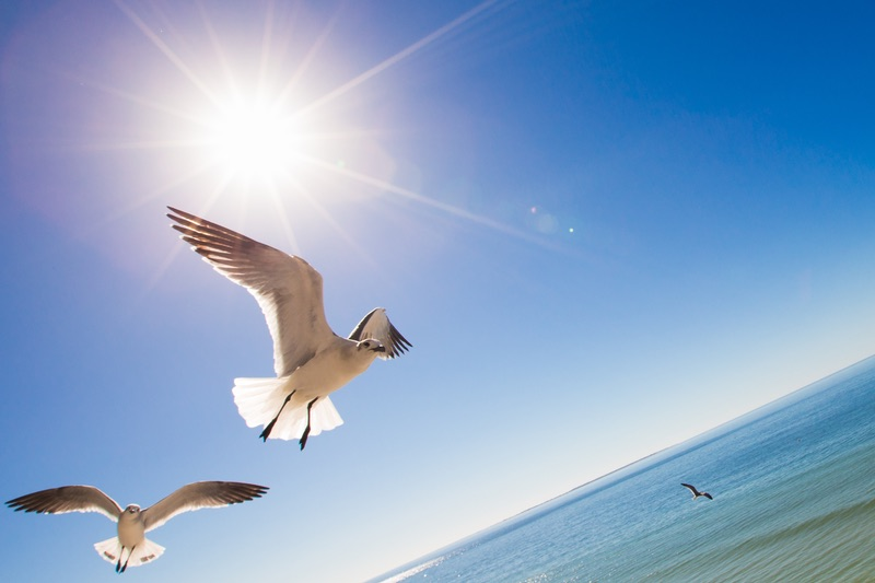 Mexico Beach bird flying over beach
