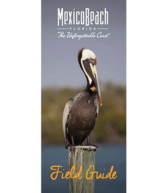 Birding Field Guide of Northwest Florida
